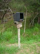 Télé courrier