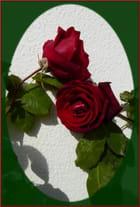Tendre câlin entre roses