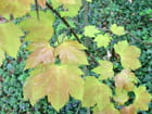 Tendres feuilles