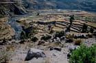 Terrasses du canyon de colca