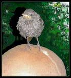 Tète et petit oiseau