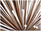 Tiges de bambou