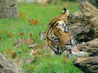 Tigre12-09
