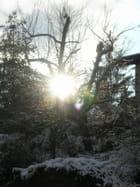 Timide percée de soleil