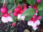 Timides fleurettes