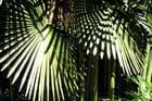 Tissage d'ombre et de lumière