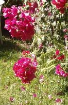 P \' tites fleurs fanées