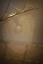 toile d'araignée au p'tit matin