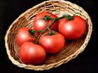 Tomates en grappe