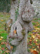 Torture pour un arbre?