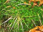 Touffe racines et mousse
