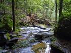 Toujours en forêt