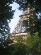 Tour Eiffel entre les platanes
