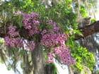 Tourterelle et orchidées