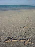 Toutes seules sur cette plage ...