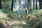 travail dans la forêt