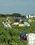 Travailleurs immigres