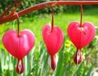 Trois coeurs tendres