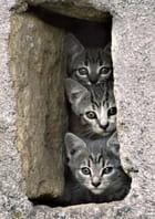 Trois petits chats curieux
