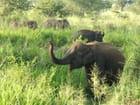 Troupeau d'éléphants