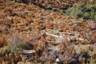 troupeau de moutonsdans la montagne