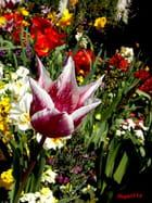 Tulipe et fleurs