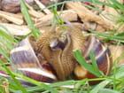 Un amour d'escargot