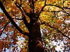 Un arbre........
