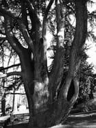 Un arbre bi-centenaire.