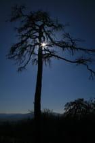 Un arbre et du soleil