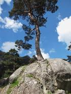Un arbre perché!