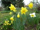 Un avant-goût du printemps dans le jardin