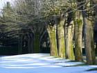 un bel alignement avec un tapis de neige