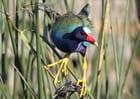 Un bel oiseau tres colore