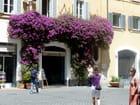 un bougainvillier à Rome