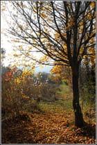 Un brin d'automne, dans le Var...