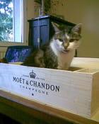Un chat dans une boite