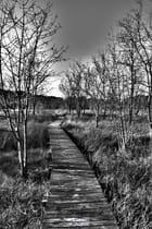 Un chemin dans l'étang