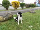 Un chien perdu bien obéissant