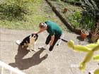 Un chien reconnaissant