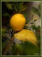 un citron