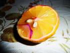 Un citron boudeur