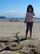 un cobra sur la plage !