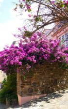 Un coin à Collioure