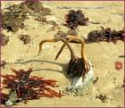 Un crochet ... d'algues