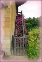 Un escalier fleuri à TRIANON