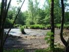 Un étang asséché