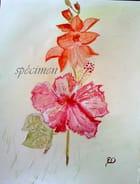 un glaïeul et un hibiscus peinture aquarelle