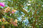 Un iguane dans un arbre