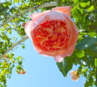 Une fleur dans le bleu du ciel